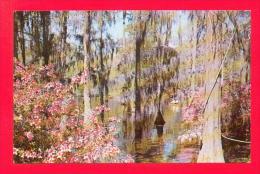 U.S.A.  SOUTH CAROLINA  -  MONKS CORNERS  -  23781  Cypress Gardens - Etats-Unis