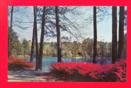 U.S.A.  VIRGINIA  -  NORFOLK  -  Azalea Gardens - Norfolk
