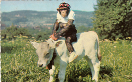 Thematiques Singe Chimpanzé Veau - Monkeys