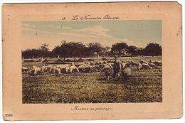 La Normandie  Illustrée - Moutons Au Pâturage - Colorisée - Basse-Normandie