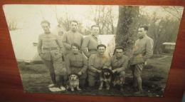 Carte Photo Originale 1920 Soldats Infanterie Alpine Avec Mascottes - 1914-18