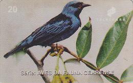 Télécarte Brésil - OISEAU Exotique - DACNIS BLEU  - Bird Brazil Phonecard - Vogel Telefonkarte - 2379 - Songbirds & Tree Dwellers