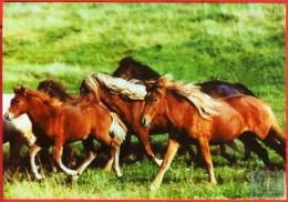 Voyo  HORSE ISLANDER Vanda,Eldey,Elding, Hvoenn, Esja 2005 Irene Hohe MINT Nr 19 - Chevaux