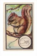 Kwatta - Zoologie (ca 1940) - 27 - Ecureuil, Eekhoorn, Squirrel - Chromos
