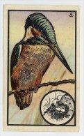 Kwatta - Zoologie (ca 1940) - 88 - Eisvogel, IJsvogel, River Kingfisher, Martin-pêcheur D'Europe - Trade Cards