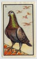 Kwatta - Zoologie (ca 1940) - 91 - Pigeon Voyageur, Reisduif, Pigeon - Kaufmanns- Und Zigarettenbilder