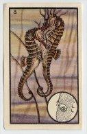 Kwatta - Zoologie (ca 1940) - 145 - Hippocampe, Zeepaardje, Seahorse - Sonstige