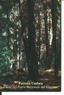 CAL550 - CALENDARIETTO 1999 - FORESTA UMBRA - PARCO NAZIONALE DEL GARGANO - MONTE SANT´ANGELO - FOGGIA - Formato Piccolo : 1991-00