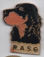 Chien Setter Gordon , R.A.S.G. - Animali