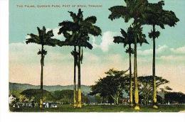 TRINIDAD -  The Palms - Queens Park, Port Of Spain - - Trinidad