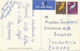 AFRICA, CHEETAH,UGANDA Stamp,2 Stams Bird, Vintage Old Postcard - Uganda (1962-...)