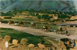 CARAVAN W PAKISTAN        CACHET TIMBRE - Pakistan