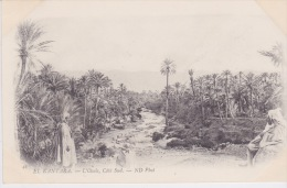 Algérie - El Kantara - L'Oasis, Côté Sud. ND Photo  -  Environs 1900 - Algérie