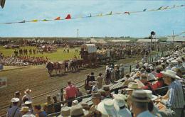 Canada Six Oxen Team Saskatoon Pion-Era Parade Saskatchewan