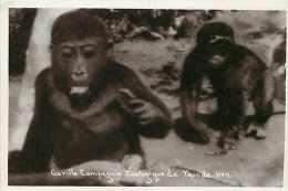 Cameroun - Ref 284- Compagnie Zoologique De Yaoundé - Zoo -singe -theme Singes -gorille -carte Bon Etat - - Cameroun