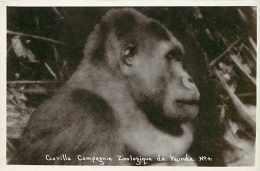 Cameroun - Ref 282- Compagnie Zoologique De Yaoundé - Zoo -singe -theme Singes -gorille -carte Bon Etat - - Cameroun