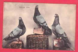 AD111 -OISEAUX PIGEONS VOYAGEURS ? RAMER BLAU 1942 COLOMBOPHILIE - Birds