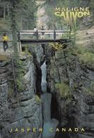 BT16471 Jasper Maligne Canyon  2 Scans - Jasper