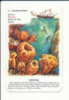 Eponge  / Animal Marin -  Pêche Aux éponges Scaphandrier Pêcheur / Sponge Fishing    // IM 127 - Vieux Papiers