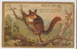 Chocolat Poulain. Chromo. Ecureuil. - Poulain