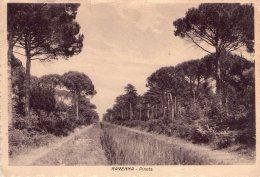 RAVENNA , Pineta    * - Ravenna