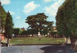 BARGA - Lucca