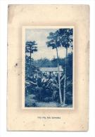 Antilles - Bermudes - Bermudas - Pau Pau And Bananas - Written 1919 - Bermudes