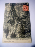 Le Gavre (L.Inf.) La Forêt Le Chêne Au Duc - Le Gavre