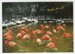 {40644} 17 Charente Maritime Zoo De La Palmyre , Flamants Roses De Cuba - Vogels