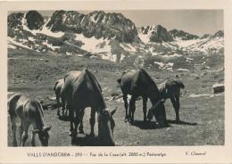 PAS DE LA CASA - Pasturatge - Chevaux - Andorra
