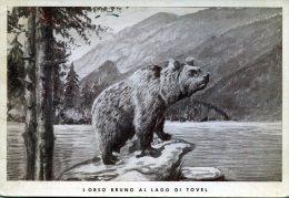 L'orso Bruno Al Lago Di Tovel - Orsi