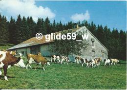 Paysage Des Monts Jura - Troupeau De Vaches Montbéliardes - N° U. 28094 - France
