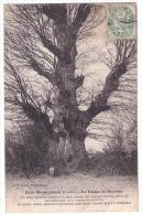 (41) 1907, Boursay, Foreau, La Trogne De Boursay - Sonstige Gemeinden