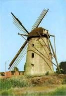 OVERPELT (Limb.) - Molen/moulin - De Molen Van Leyssen In 1973, Hier Nog Met Wieken. Romp Sinds Ca. 1978. - Overpelt
