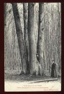 Cpa Du 27  Lyons Forêt Domaniale Chêne Remarquable Se Divisant En Quatre Parties   LOR1 - Lyons-la-Forêt
