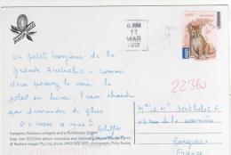 """Beau Timbre  """" Dingo """" / Carte Du 11 Mars 2012  Pour La France , 2 Scans - 2010-... Elizabeth II"""