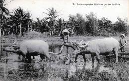 Ansichtskarte : VIETNAM, Labourage Des Rizières Par Les Buffles - Vietnam
