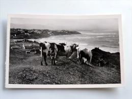 Carte Postale Ancienne : BIARRITZ : Vue Sur Les Pyrénées Avec Vaches - Biarritz