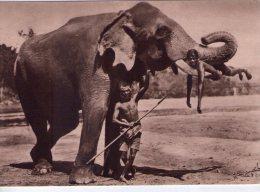 Ile De Ceylan..Hôpital De Welisara-Ragama..animée..Soeurs Providence..Ruillé-sur-Loir..Eléphant - Sri Lanka (Ceylon)