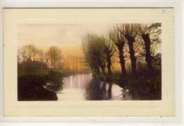 Flussau In Der Abendsonne - Künstler AK    1910 - Arbres