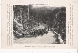 LIBAN PAYSAGE DE SYRIE 22 (CHEVRIERS ET TROUPEAU) - Liban