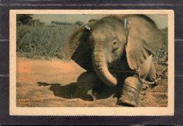 43602    Ciad,   Un  Jeune  Elephant  Du  Tchad,  VGSB - Ciad