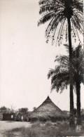 Guinee Française, Environs De Kindia, Case Et Palmiers, N° 260 - Guinée