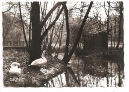 Albi-Parc -Rochegude Le Lac Des Cygnes--(Réf.7712) - Albi