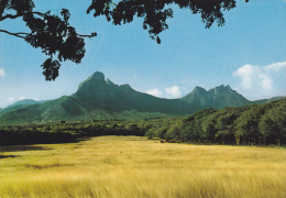 ILE MAURICE,MAURITIUS,archipel Des Mascareignes,océan Indien,ile Volcanique,montagne,prair Ie,photo Schall - Cartes Postales