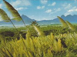 ILE MAURICE,MAURITIUS,archipel Des Mascareignes,océan Indien,ile Volcanique,FLEURS DE CANNES,pouce,pieterboth - Ansichtskarten