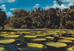 ILE MAURICE,MAURITIUS,archipel Des Mascareignes,océan Indien,ile Volcanique,PAMPLEMOUSSE,J ARDINS - Postcards