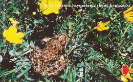 Turkey, N-100, Endangered Species, Taurus Frog, 2 Scans. - Türkei