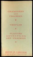 Graminées Des Prairies-Trèfles-Plantes Adventices Des Prairies - Voir Photos. - Ciencia