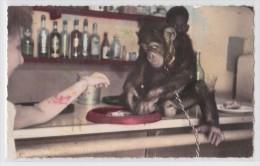 BOBO-DIOULASSO - Burkina Faso - Jojo Chimpanzé Apprivoisé Jouant Au 421 - Jeu De Dés - Singe - Primate - La Potinière 6 - Burkina Faso